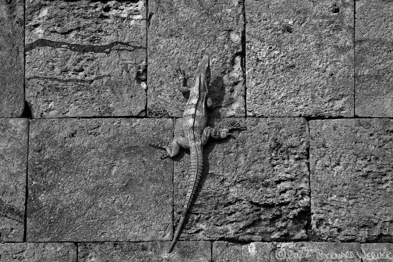 Leapin' Lizards!