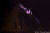 N20110104_015413<br /> <br /> Uxmal at Night