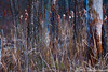 N20061230_0064<br /> <br /> Marsh Ephemeral