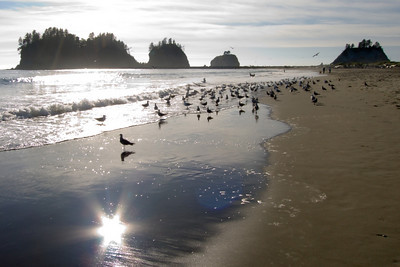 Beach with birds La Push, Washington State, USA  |  2005