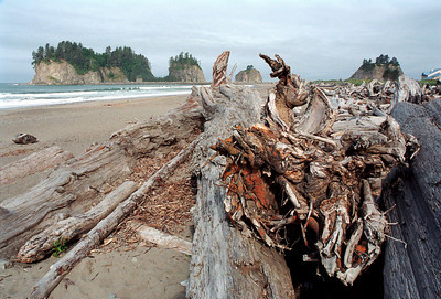 Driftwood La Push, Washington State, USA  |  2005