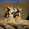 Bull statue on Roof, Ollantaytambo, Peru