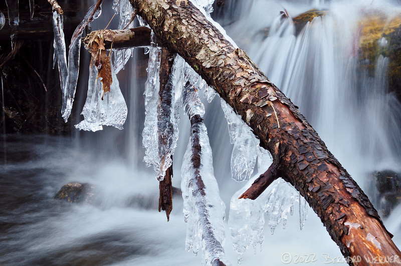 N20110327_220058<br /> <br /> Frozen Velvet