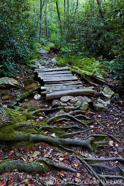 N20090919_0059<br /> <br /> Bridge in the Woods