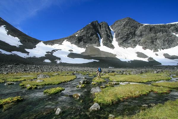 Arctic Marshland