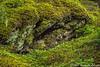 Asleep in a Blanket of Moss