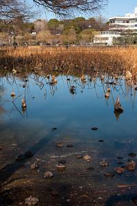 不忍池 Shinobazu Pond, Ueno Park