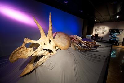 Paleontological Museum of the University of Zürich