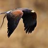 Kakegawa Kachoen Bird Park Japan