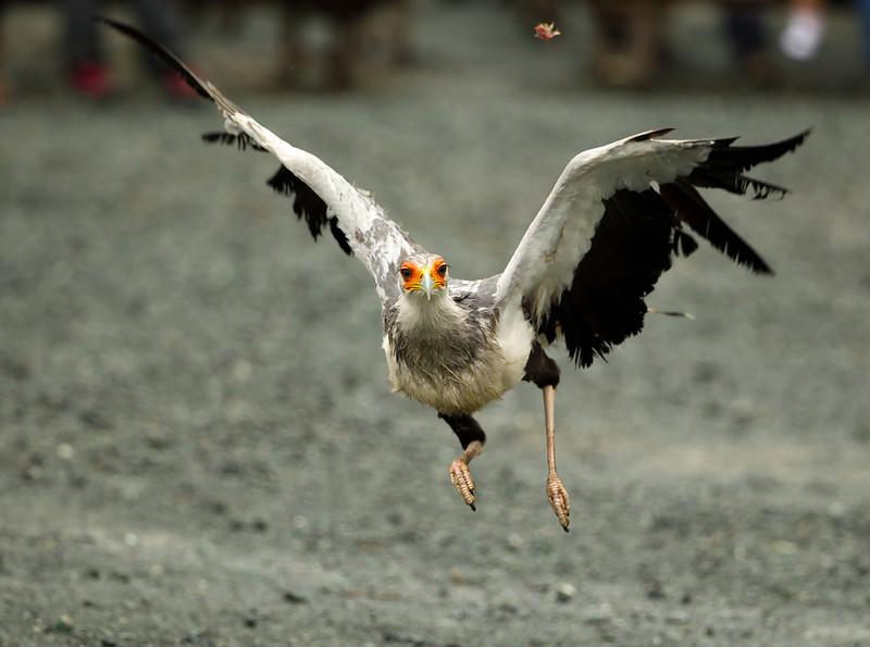 Secretary Bird Kakegawa Kachoen Bird Park Japan