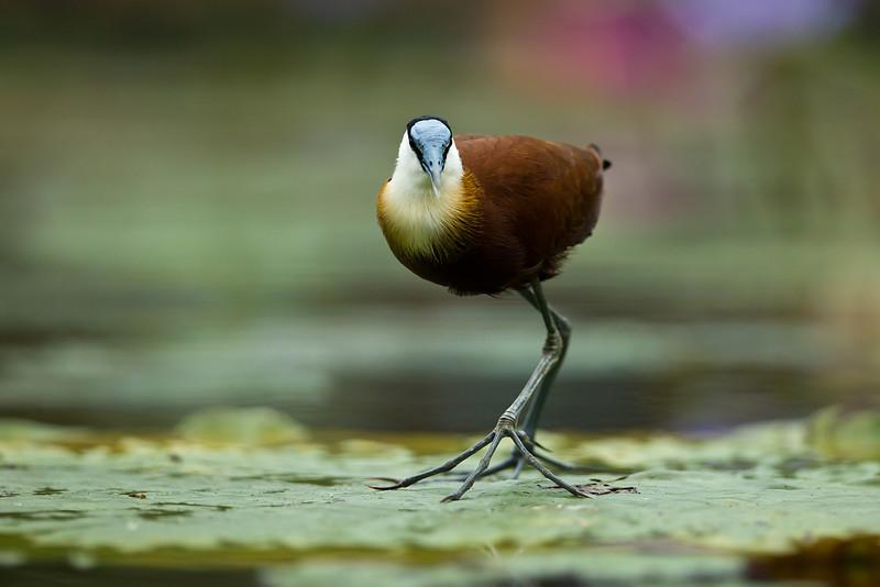 Lily Walker Kakegawa Kachoen Bird Park Japan