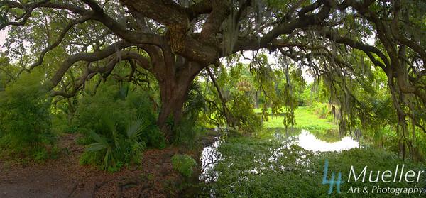 Swamp Tree Pano