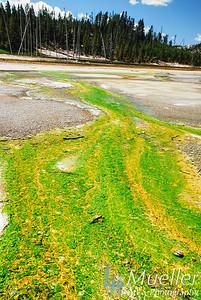 YellowstoneThermophiles