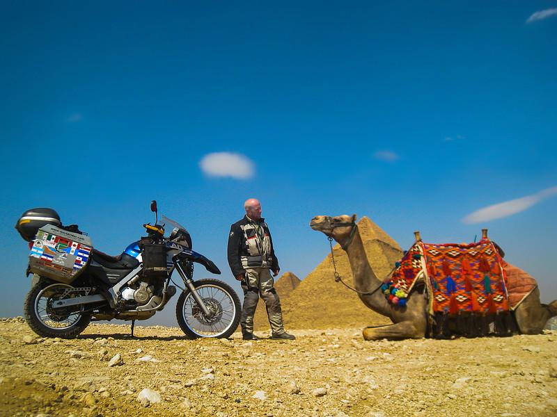 allan-giza-camel