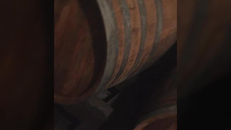 Old Cellar Ilok
