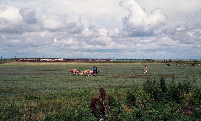"""Agricultural fields in the drainage area below the toxic waste """"dry"""" lake."""