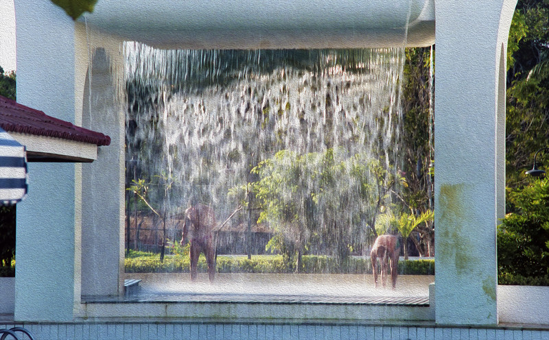 Outdoor showers at the multi-acre swimming pool.