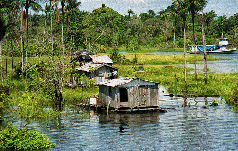 Living conditions inland in the wetlands between the Rio Negro and the Rio Solimões.