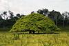 Wetland tree.