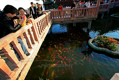 Shanghai, China - Koi Pond in Yu Yuan Gardens