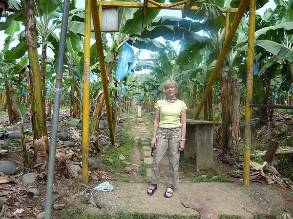Marcia Banana