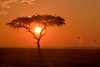 Sunrise with Acacia Tree and some Hot Air Balloons on the Masai Mara