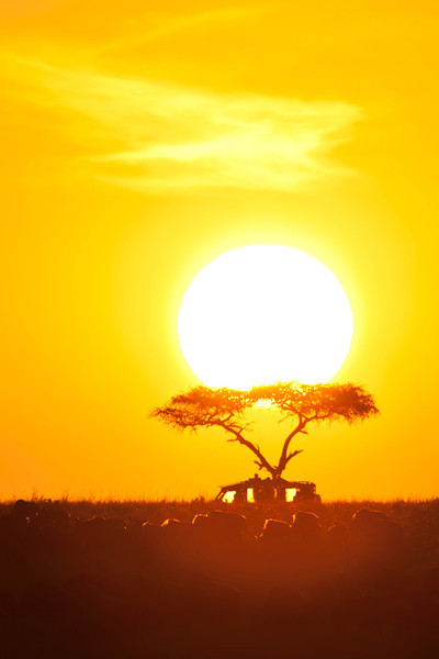 Sunrise in the Mara with acacia tree, safari participants and Wildebeest