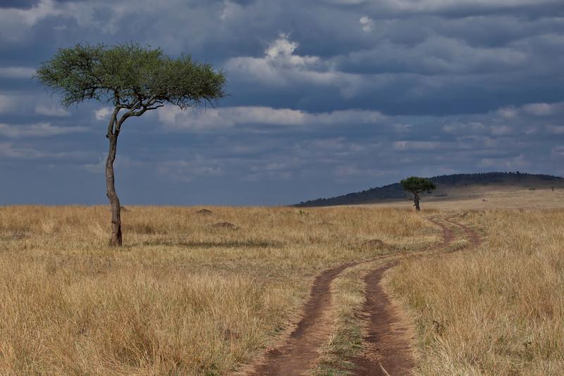 A road winding through the Masai Mara