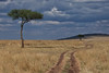 A road winding through the Masai Mara