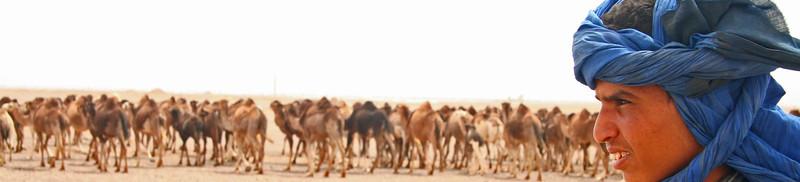 Morrocan Camel Herder