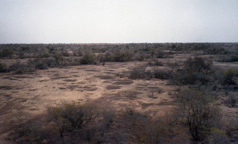 """A region of """"Tiger Bush"""". From the air it looks like tiger stripes. Deep rooted scrub tress secure a hold on the landscape, surviving between infrequent storms and creating a micro-environment that traps some of the runoff, allowing other species to survive as well."""