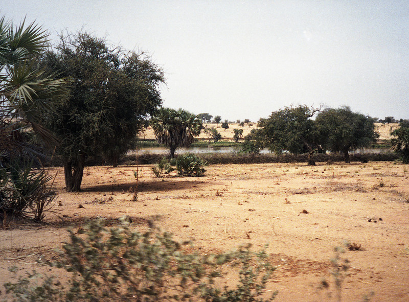 Relatively lush area close to the Niger River.