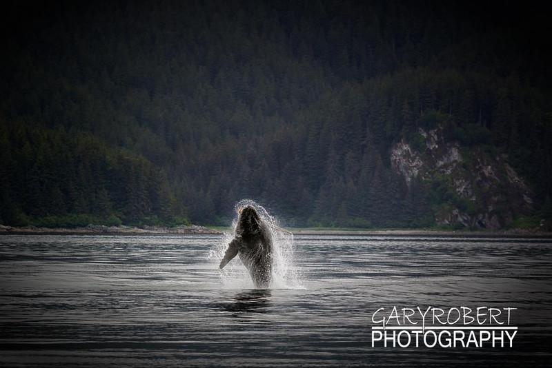 Alaska-8915-2