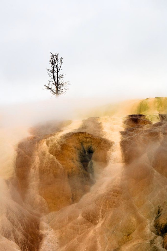 Yellowstone-4037
