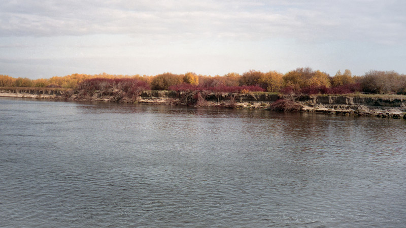 The banks of the Lena. The trees resemble willows; the banks are very sandy.
