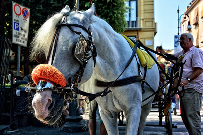 Horse drawn carriages in Sorrento, Italy