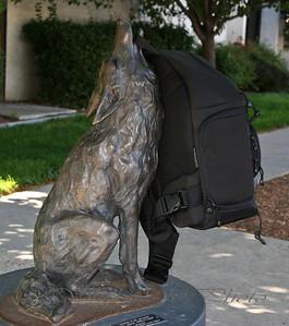 Lowepro Lobo (wolf)