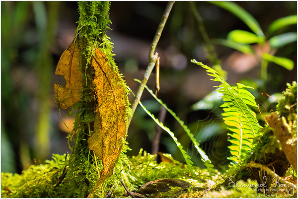 Moss, decayed leaf, and spider web