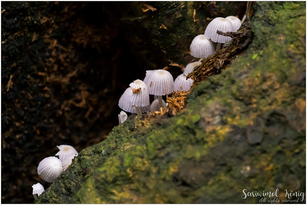 White mushrooms in the forest
