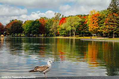 Beaver Lake, Mont-Royal, Montreal, Canada