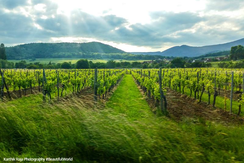 Route du Vin, Alsace, France