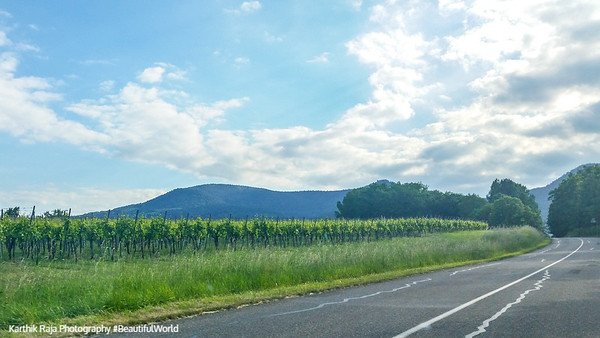 Route du Vin, Alsace, France