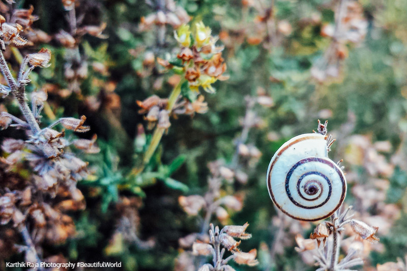 Escargot, snail, Saint-Puy, France