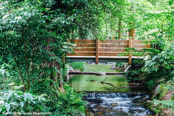Stream, Gastatte Schneckenmatt, Gengenbach, Black Forest, Germany
