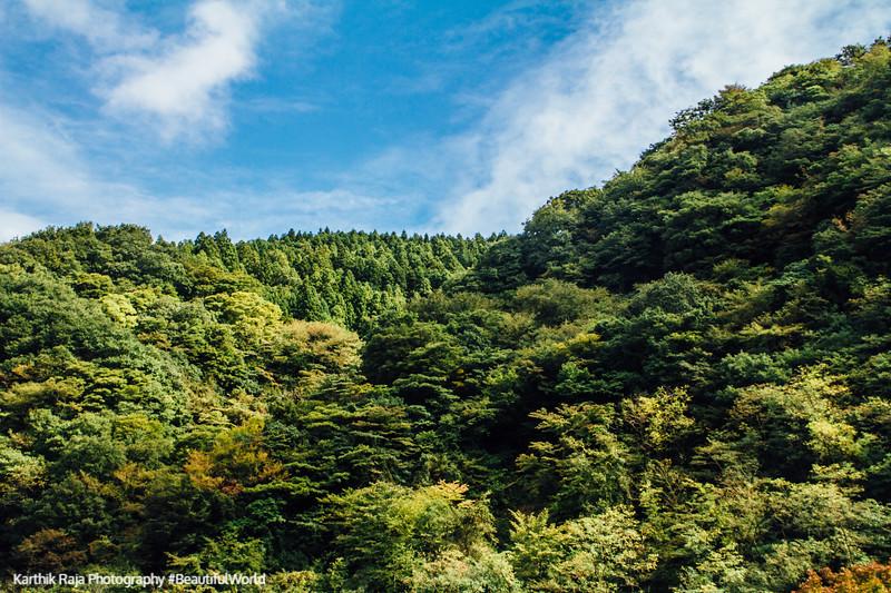 Fall colors, Fuji-Hakone-Izu National Park, Japan