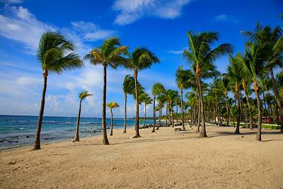 Coconut trees and the Caribbean Sea, Riviera Maya, Mexico