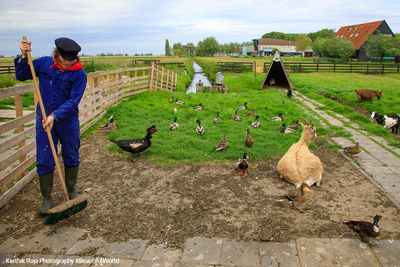 Cheese Farm Catharina Hoeve animals, Zaanse Schans,  Netherlands