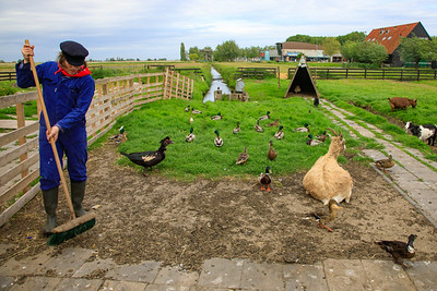 Cheese Farm Catharina Hoeve animals, Zaanse Schans,  Netherlands
