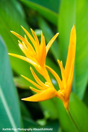 Flower, El Yunque National Rainforest, Puerto Rico