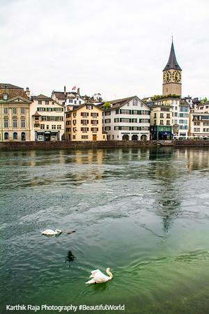 Swan on the Limmat, Zurich, Switzerland